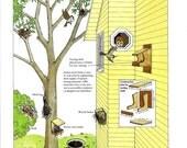Bird Nests Print Vintage DIY Book Plate Bird Nest Materials Building Bird Nesting Shelf Birds Around Us John Dawson 1986