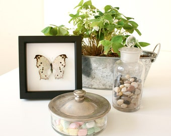 Real Framed Butterfly Displays Mother of Pearl