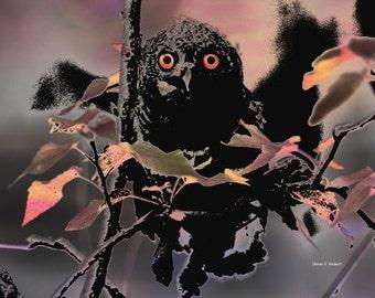Owl in Tree Art, Digital Bird of Prey, Abstract Realism Woods, Night Darkness, Woodland Wildlife, Pink Peach Home Decor, Giclee Print 8 x 10