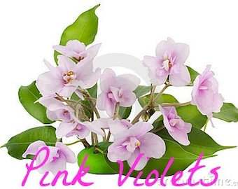 PINK VIOLETS Scented Soy Wax Melts - Tart - Floral - Citrus Notes - Beautiful - Wickless Candle - Air Freshener - Highly Scented - Hand Made