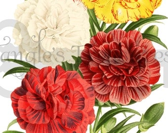 Vintage Carnations Clipart: High Resolution Printable Artwork, Commercial Use - Image No. R108 Instant Download
