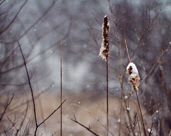 Dark Nature Winter Photography, Natural Woodland Photograph, Dark blue brown home decor, snow ice, January, Rustic Rural