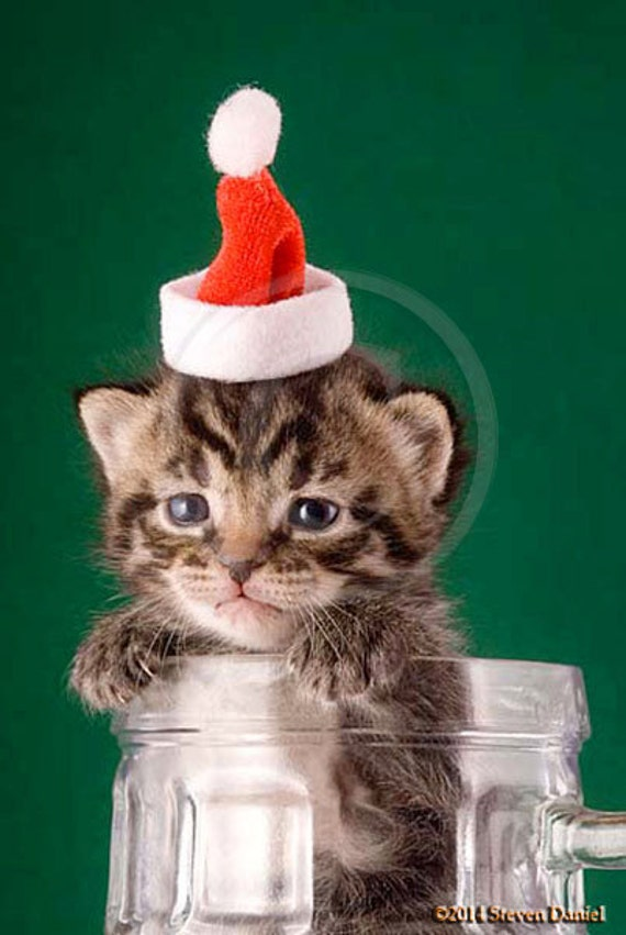 Kitten in Mug with Santa Hat, Cute Kitten