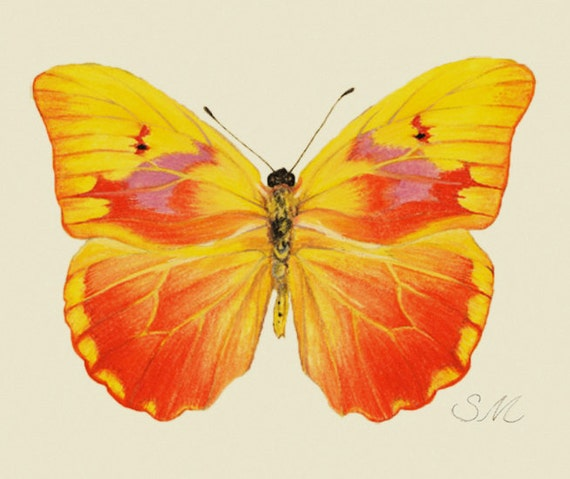 Yellow Butterfly print-from original gouache painting