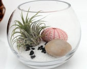 Air plant zen garden terrarium kit with Tillandsia Ionantha, white sand, sea urchin and polished pebble- fish bowl style desktop terrarium