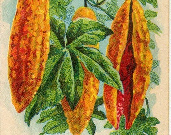 BALSAM APPLE! (Pear) Vintage Flower Seed Packet Tuckers Seed House Lithograph (Carthage, Missouri)
