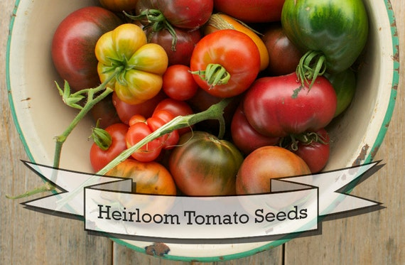 Six Pack of Rare, Heirloom and Organic Heirloom Tomato Seeds - Gift Collection for Gardener