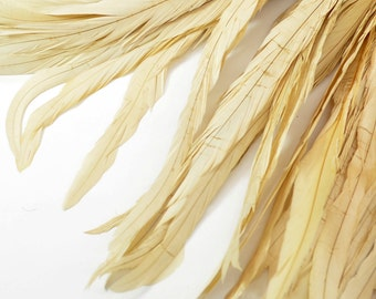 Magnifica Rooster Tail Feathers - Handpicked, Ivory Beige (10pcs)