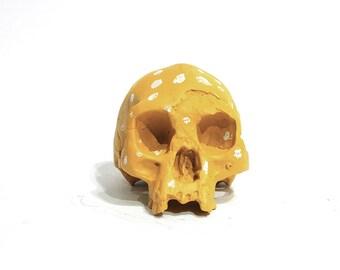 Homo floresiensis chalkboard skull