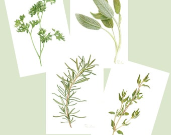 4 Herb PRINTS / Parsley Sage Rosemary Thyme / Kitchen Art / Colored Pencil Art / Herbal Art