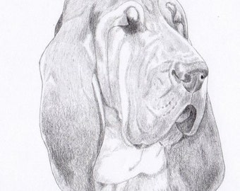 Bloodhound Note Cards - Gift Set of Eight - Free Shipping US - Original Pencil Art Design - Desert Impressions