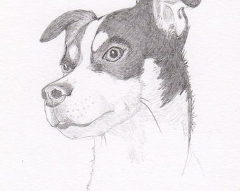 Rat Terrier Signed Personalized Original Pencil Drawing Double Matted Print -Free Shipping- Desert Impressions