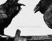 Raven, Odin artwork , Raven, crow, Huginn and Muninn, Etching, assorted colors, 5 inch x 14 inch 2013