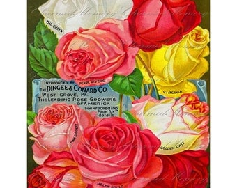 Rose Digital Collage Sheet ON SALE!!! Vintage Seed Catalog Digital Download Floral, Victorian, Nature Large Image #5 INSTANT Download