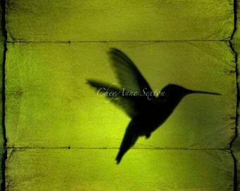 Neon Green Hummingbird Behind the blinds CANVAS Art