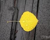 Aspen Leaf on Wooden Bridge (photo, various sizes)
