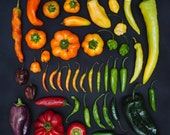 PEPPERS in rainbow 10x10 print