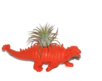 Albert the Pinacosaurus Dinosaur planter in citrus orange with air plant.