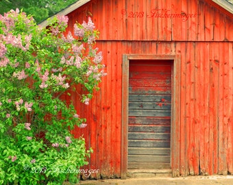 Old Red Barn Door Lilac Tree Wall Art Home Decor Photo Print Fine Art Photography