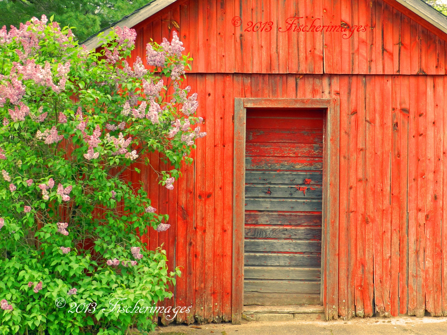 Red Barn Wall Decor : Old red barn door lilac tree wall art home decor photo print