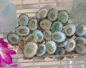 Aqua Limpet Shells for Beach Decor - 25 pieces