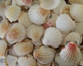 White and Rosy Pink/ Blush Scallop Pectin Shells for Coastal Decorating/ Arts/ Crafts/ Loose Seashell Supplies/ Peach, Pink, White Shells