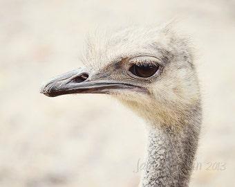 Ostrich Portrait Fine Art Photograph 8x10