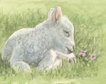 Little Lamb 5x7 Print