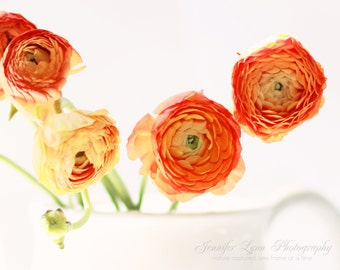 orange decor flower photography ranunculus teapot / 8x10 or 16x20 Fine Art Photography / orange white green flowers ranunculus