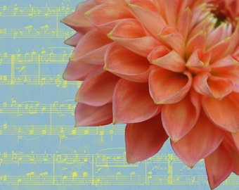 Floral Notes - Peach Dahlia, flower art, fine art, floral photo, abstract floral note card, greeting card, abstract still life