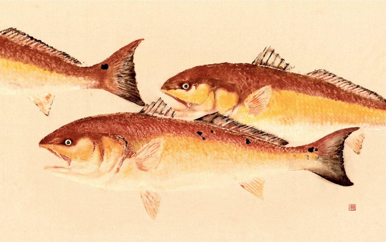Big chief redfish gyotaku fish print for Big fish printing