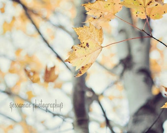 Tree Photography Print, Tree Art, Autumn Leaves, Maple Tree Photography Print, Nature Photography, Gray and Yellow Art, Tree Decor, Leaf Art