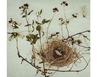 Bird nest print, blackberry brambles, soft green and taupe, still life photography, nest art