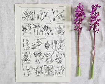 1920 French Botantical print Iris and Orchids