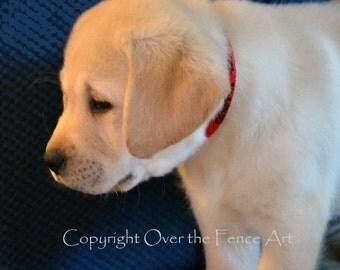 YELLOW LABRADOR Greeting Card  Puppy