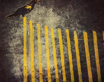 Gothic Crow Photograph Haunting Crow on Yellow Fence Dark Atmosphere Nature Bird Raven Black Yellow wall Decor 8x8