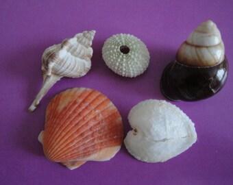Sea Shell Seashells Lot of Sea Urchin and 4 Seashells.