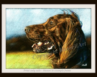 Irish Red Setter Dog LARGE A4 A3 or A2 Limited Edition Art Print of original colour pencil drawing by York artist Steve Russell - RussellArt