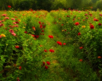 Wildflower Dream, Flower Photograph, Farm, Late Summer, Wildflowers, Field, Green, Red, Path, Colorful, Dreamy, Home Decor, Wall Art