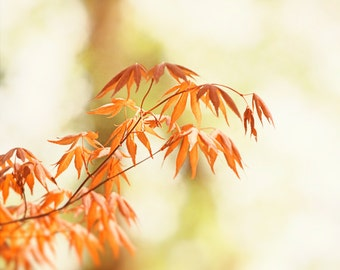 """Leaves Photography, fall autumn leaf art prints orange white light brown pale yellow rust branches photo branch wall art, """"Autumn Days"""""""