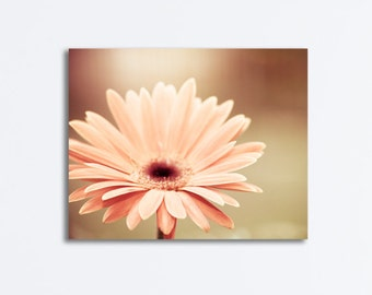 """Peach Flower Canvas, daisy nature photography beige floral gallery wrap light brown photo modern wall art botanical picture, """"Peachy Keen"""""""