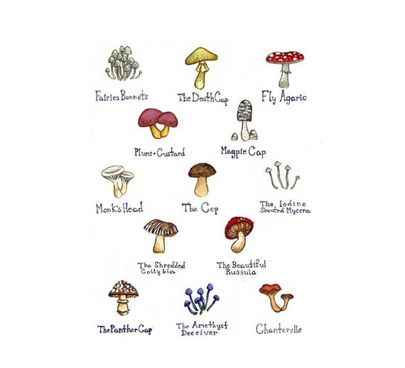 Mushrooms Field Guide Art Print  / Watercolor Painting / Wall Art / Nature Print