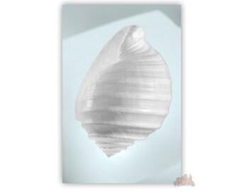 Blue Art, Bathroom Decor, Seashells Home Decor, Bath Art, Pale Blue, Aqua, Shell Photography, Seashell Art, Home Decor, 8x12, 11x17, 16x24