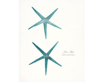 Two Coastal Decor Antique Sea Stars Giclee Art Print 8x10 bright turquoise