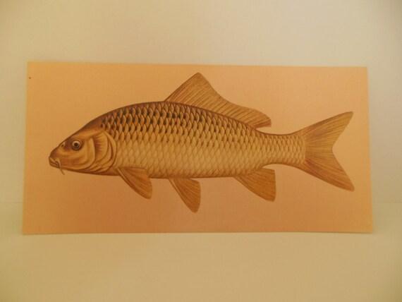 Vintage fish flashcard color decor paper ephhemea carp for Decorative carp