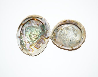 Abalone Sea Shell Abalone Shell Mother of Pearl Beach Wedding Nautical Decor