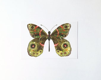 Butterfly No.6 - postcard