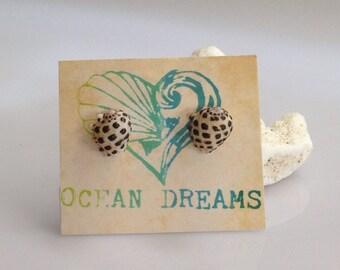 Hawaiian Seashell Studs