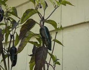 5 Mayan Black Pepper Seeds-1247
