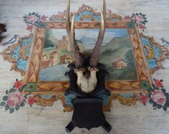 Roe Deer Trophy Mount Antlers